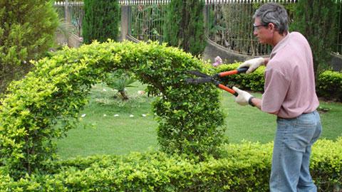 Jardineiro - Execução de obras de paisagismo - Rio de Janeiro
